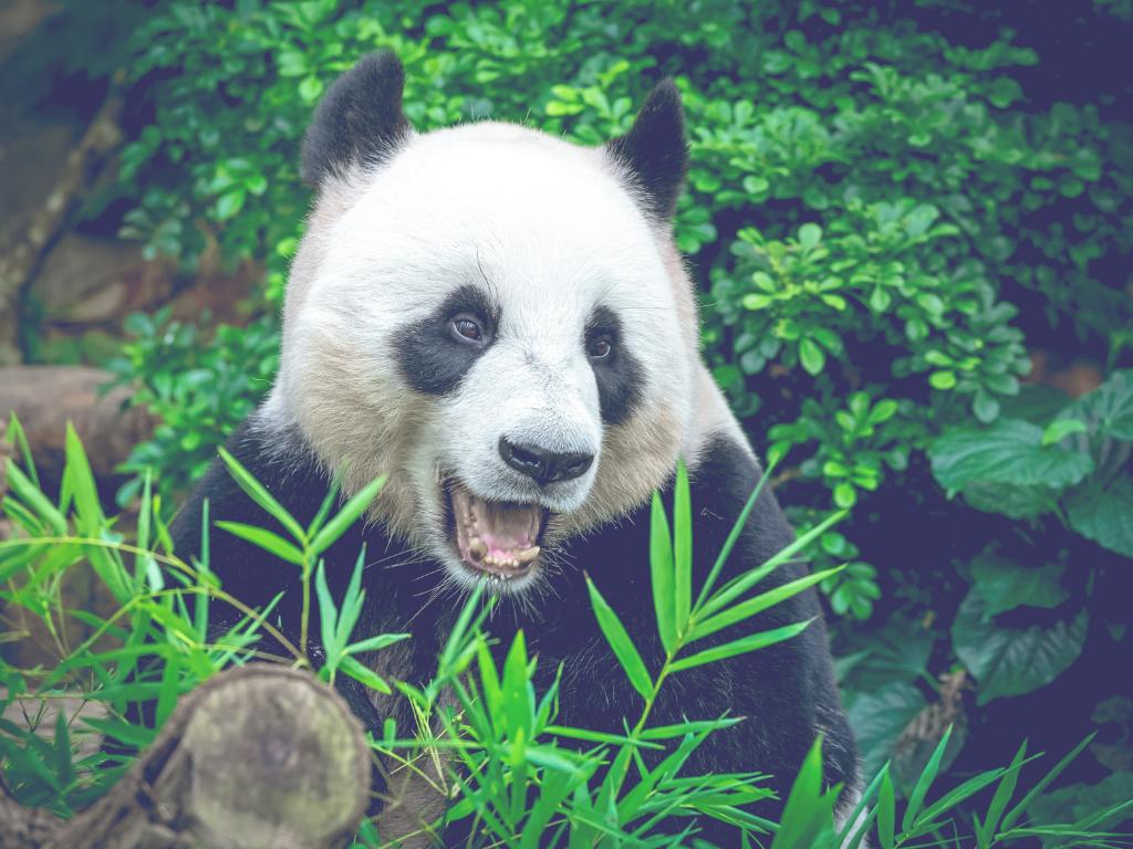 bambusz vegán fogkefe